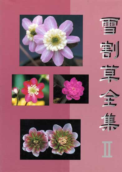 Buch Hepatica-Leberblümchen-Japanisch-Nr II--0