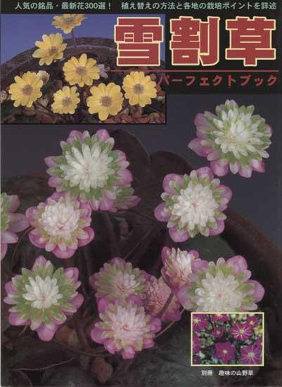 Buch Hepatica-Leberblümchen-Japanisch-Vol. 1-0