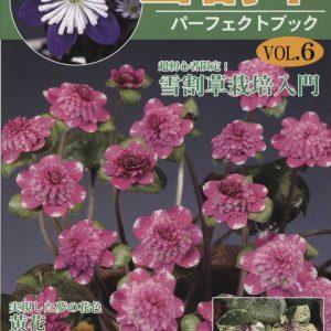 Buch Hepatica-Leberblümchen-Japanisch-Vol. 6-0