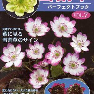 Buch Hepatica-Leberblümchen-Japanisch-Vol. 7-0