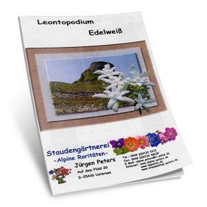 Leontopodium Edelweiß-0