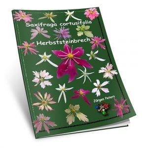 Saxifraga Cortusifolia-0