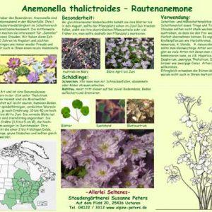 Info Anemonella-0