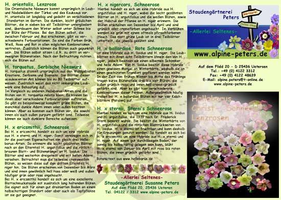 Info Helleborus Pflanzanleitung-6855