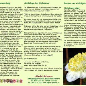 Info Helleborus Pflanzanleitung-0