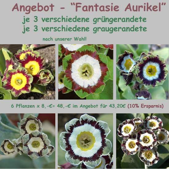 Die Show Aurikel-0