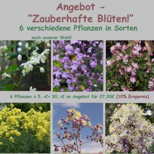 """Angebot """"Zauberhafte Blüten""""-0"""