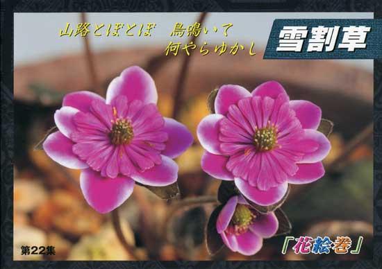 Japanische Hepatica Katalog Nr 22-0